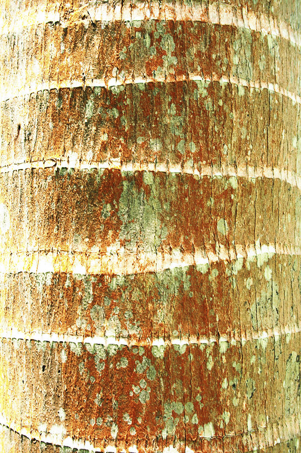 Coconut Palm Bark 2 Photograph  - Coconut Palm Bark 2 Fine Art Print