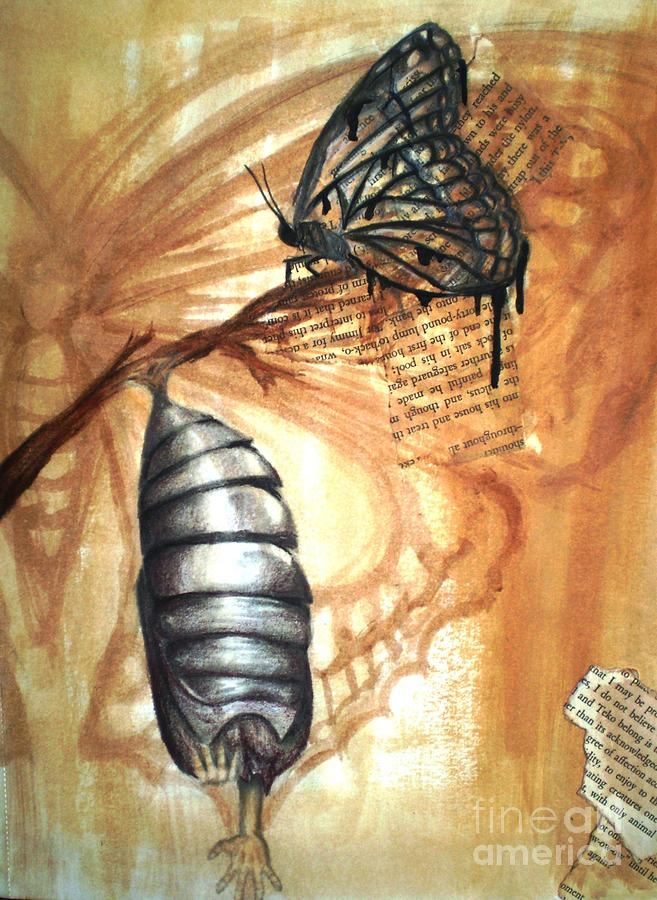 Butterfly Cocoon Drawing Cocoon Drawing