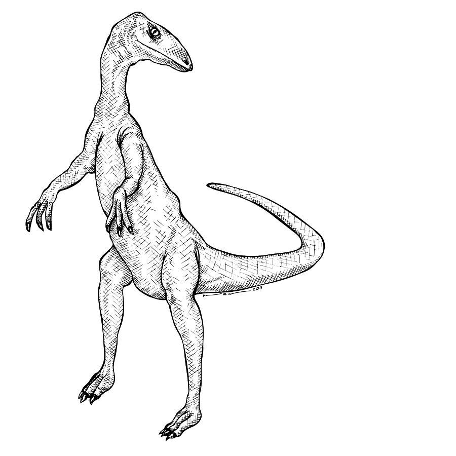 Cartoon Drawing - Coelophysis - Dinosaur by Karl Addison