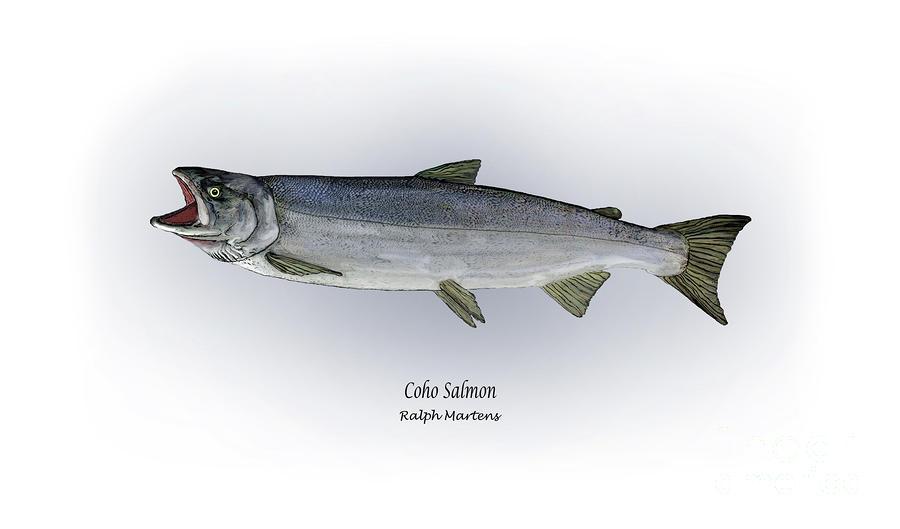 Coho Salmon Painting