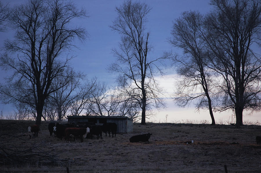 Cold Iowa Evening Photograph