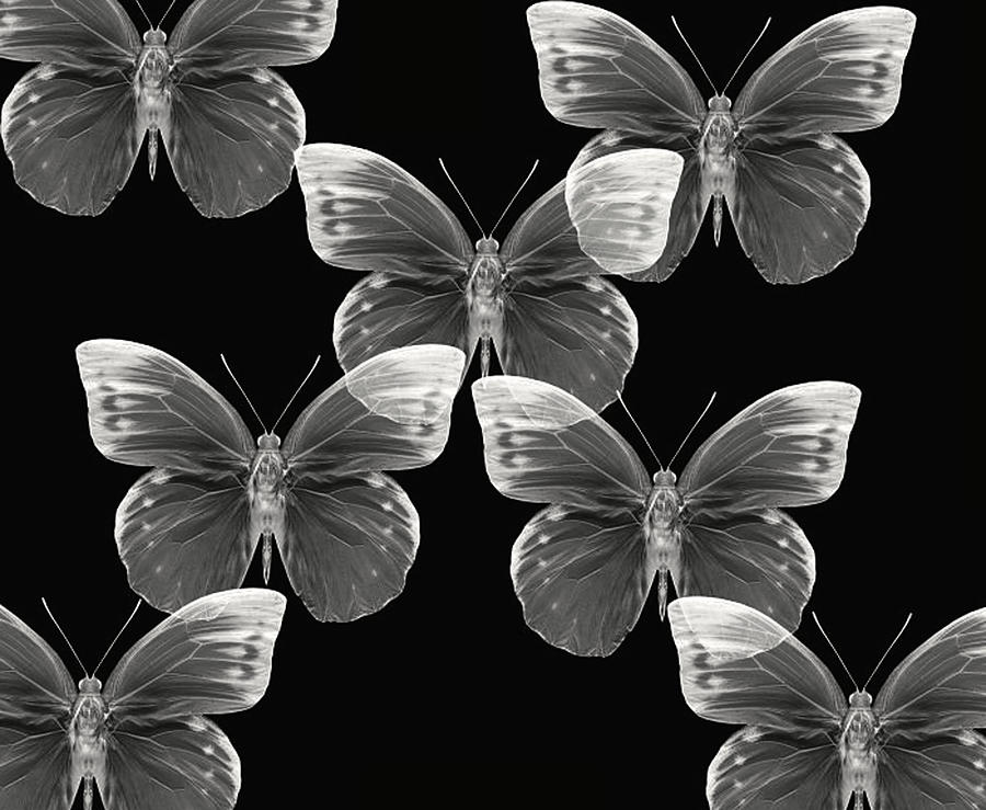 Butterfly Photographs Photographs Photograph - Collection by Lourry Legarde