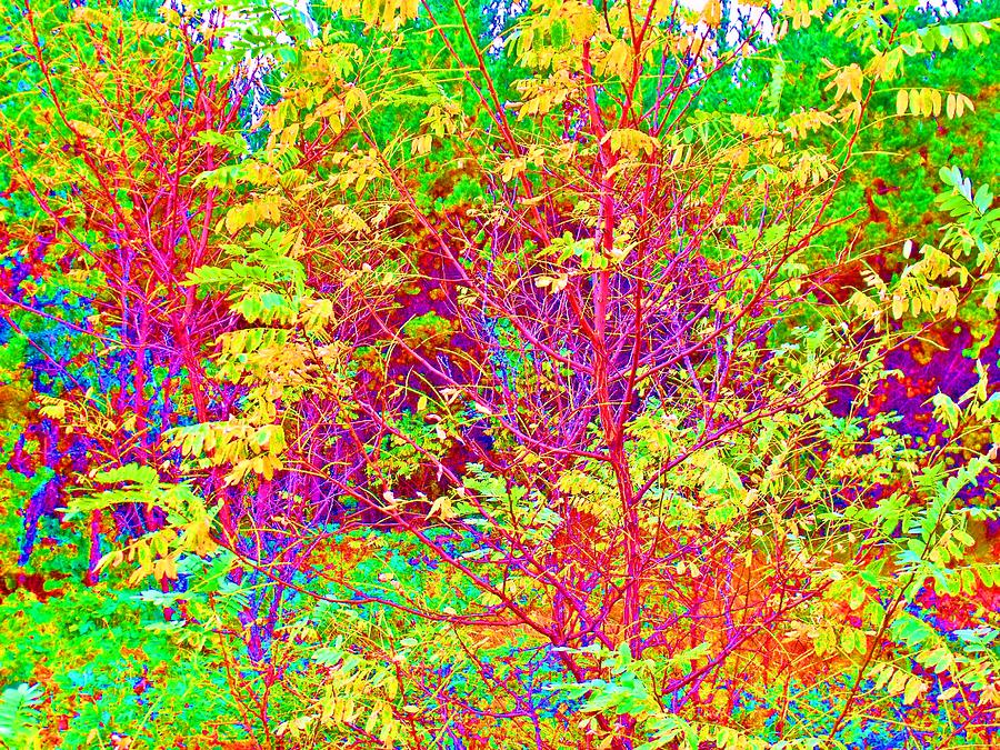 Color 12 Photograph  - Color 12 Fine Art Print