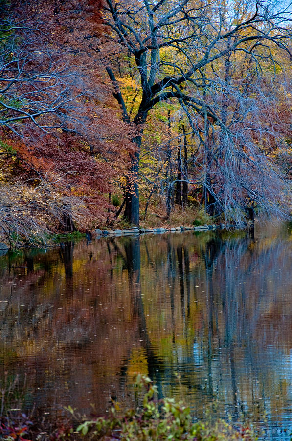 Central Park Nyc Photograph - Color Fall by Martin Goldberg