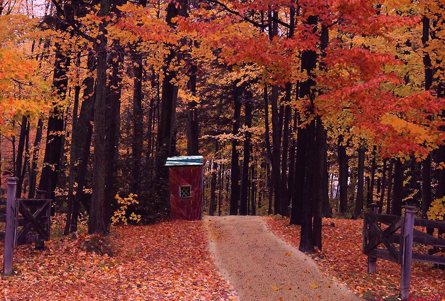 Color Of Fall Digital Art
