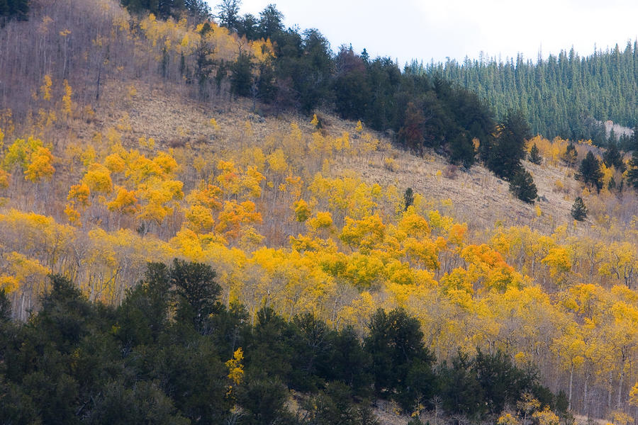 Colorado Mountainn Aspen Autumn View Photograph