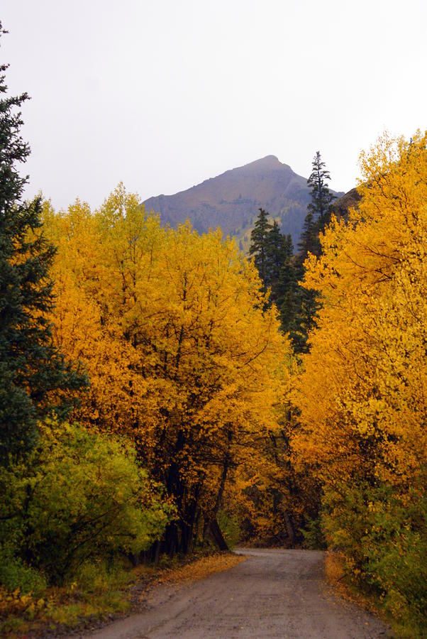 Colorado Road Photograph