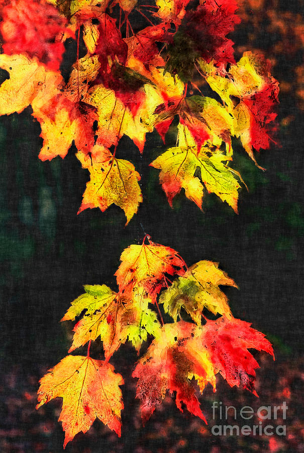 Colorful Autumn Leaves IIi Painting