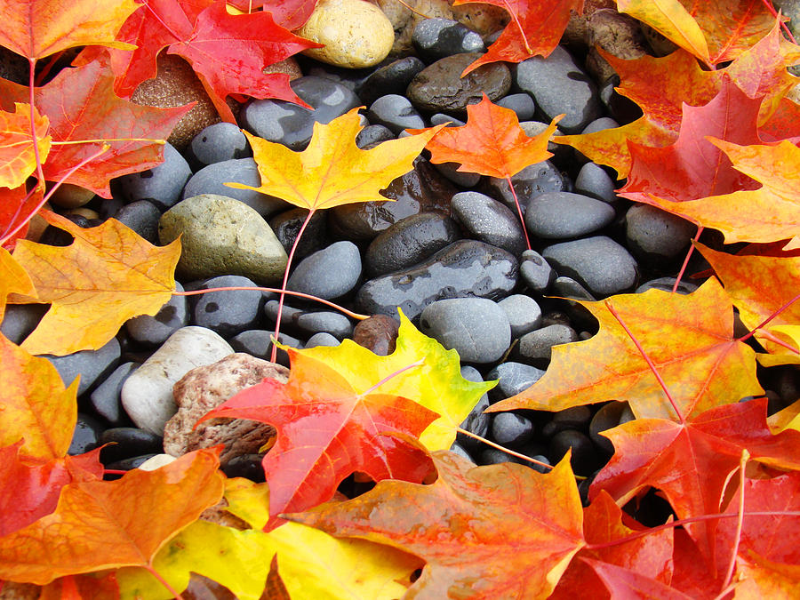 Colorful Autumn Leaves Prints Rocks Photograph