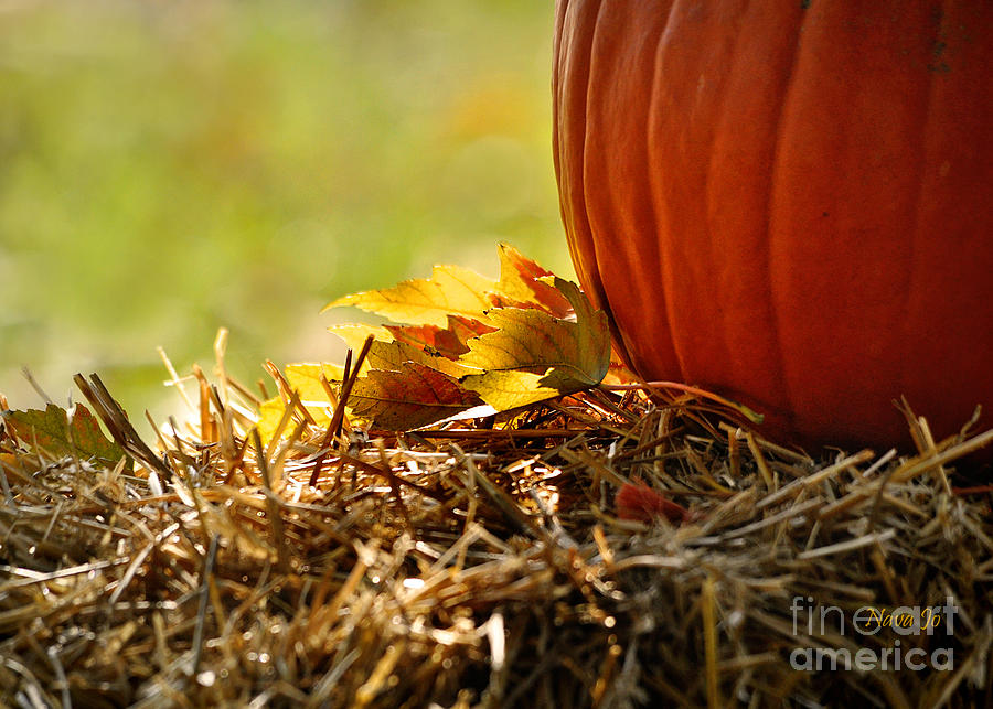 Colorful Autumn Photograph  - Colorful Autumn Fine Art Print