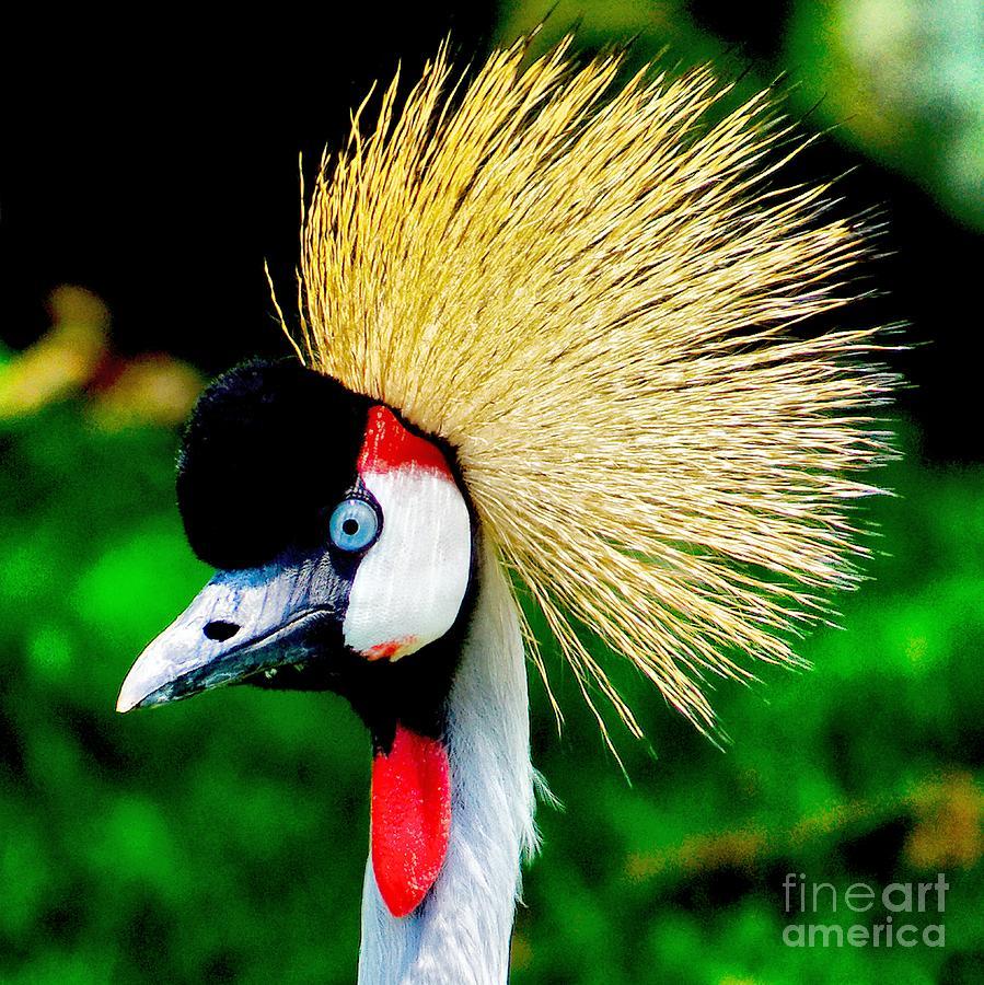 Bird Photograph - Colo...
