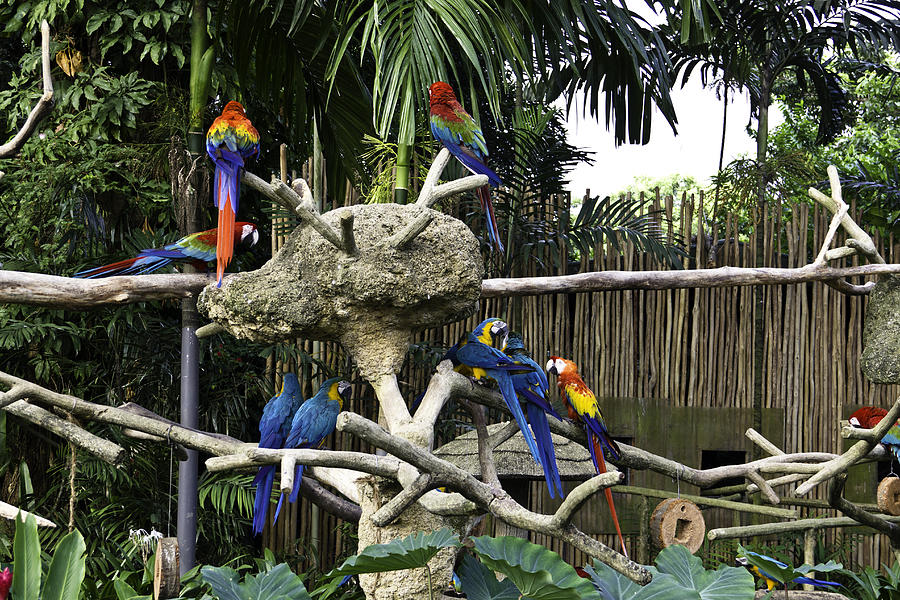 Colorful Birds On A Branch Inside The Jurong Bird Park In Singap Photograph