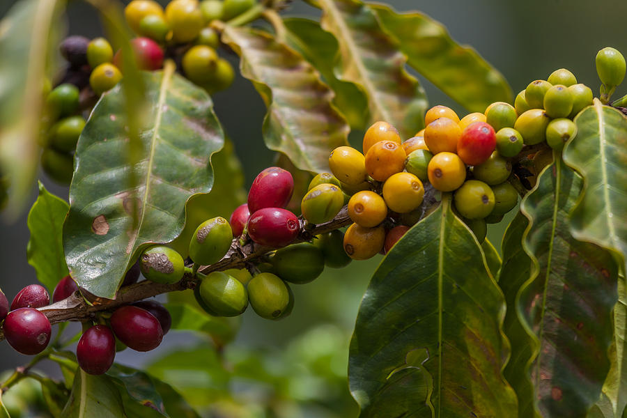 Colorful Coffee Beans Photograph