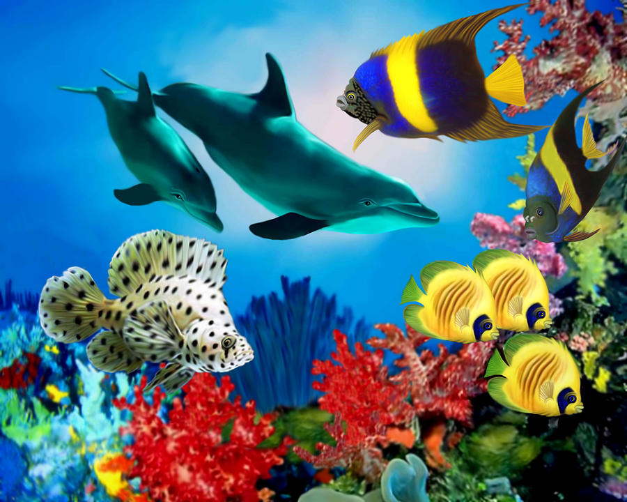Colorful fish for sale for Colorful freshwater fish for sale
