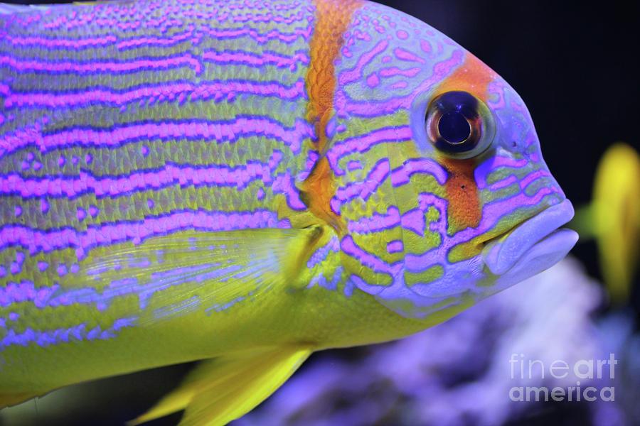 Colorful Fish By Giancarlo Liguori