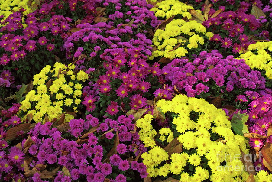 Autumn Blooming Flowers