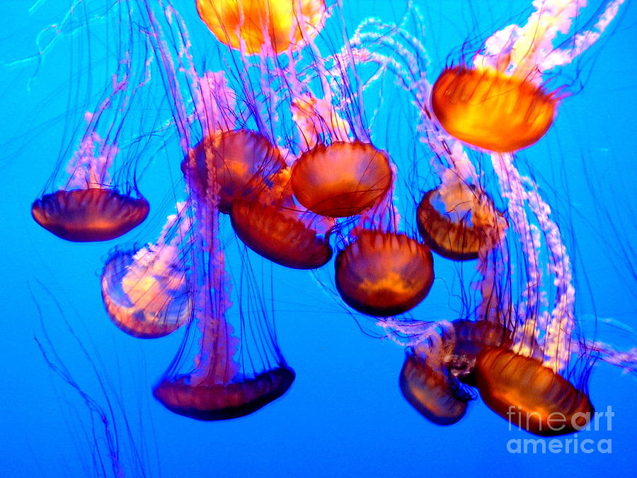 Colorful Jellies Photograph