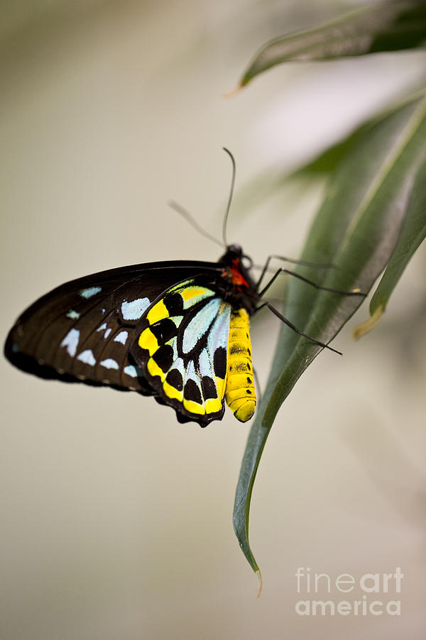 Butterfly Photograph - Colorful Lady by Leslie Leda