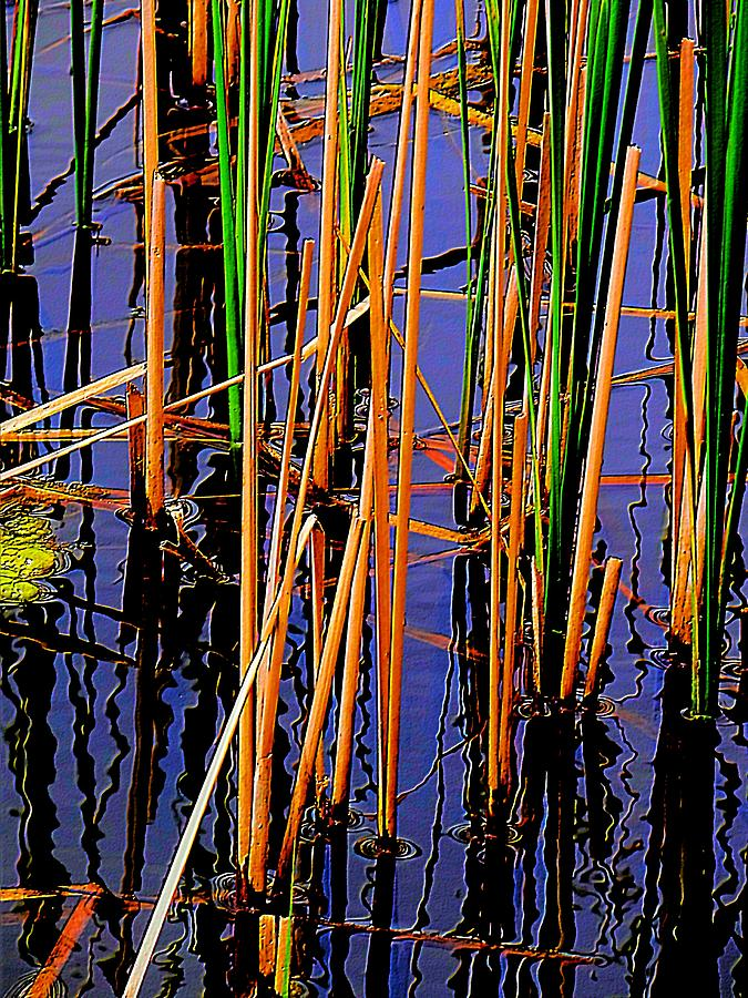 Colorful Reeds Photograph  - Colorful Reeds Fine Art Print