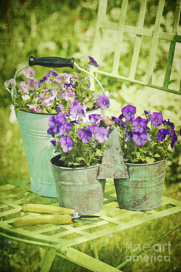 Colorful Spring Flowers On Garden Chair Photograph  - Colorful Spring Flowers On Garden Chair Fine Art Print