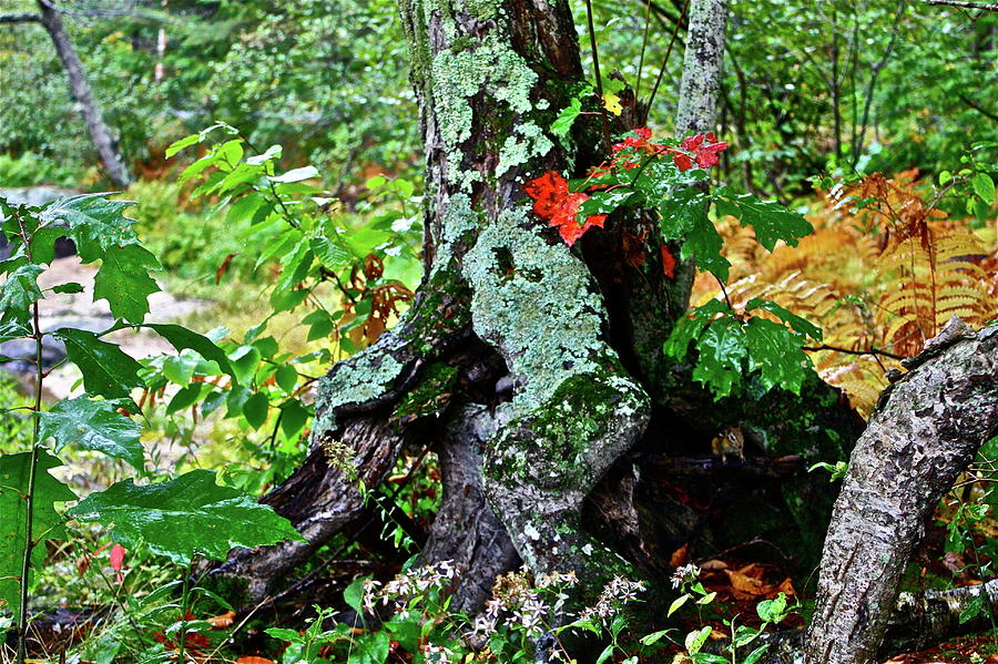 Colorful Stump Photograph