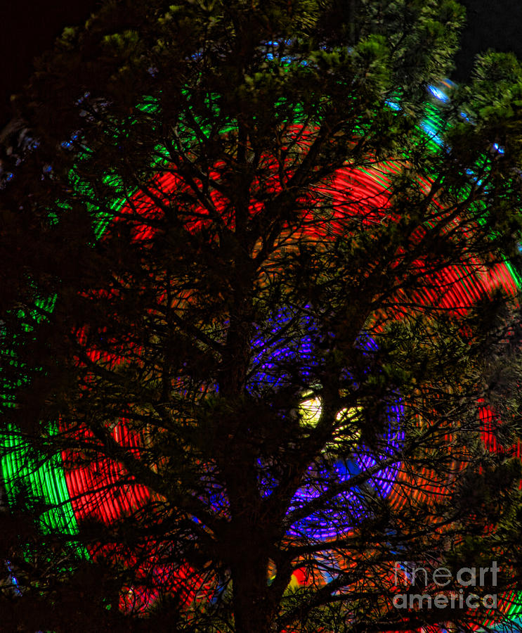 Colorful Tree Photograph  - Colorful Tree Fine Art Print