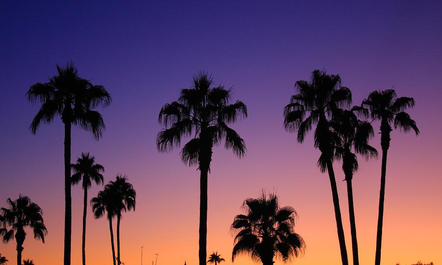 tropical sunset palm tree - photo #28