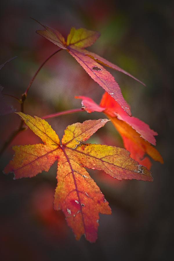 Autumn Photograph - Colors by Karol Livote