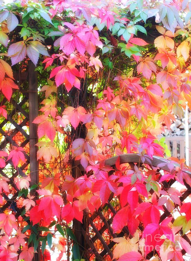 Colors Photograph