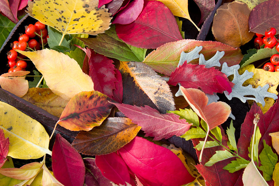 Arranged Photograph - Colors Of Autumn by Shane Bechler