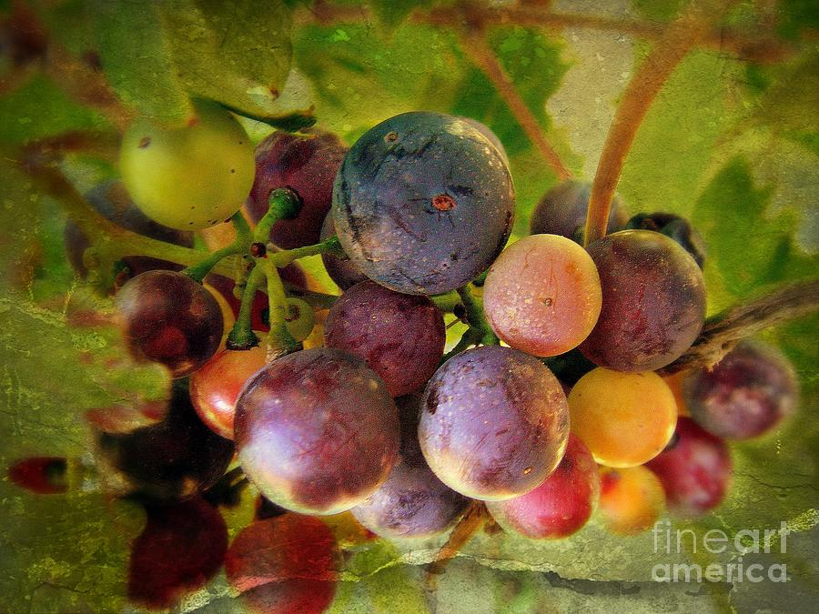 Colors Of Wine Photograph  - Colors Of Wine Fine Art Print