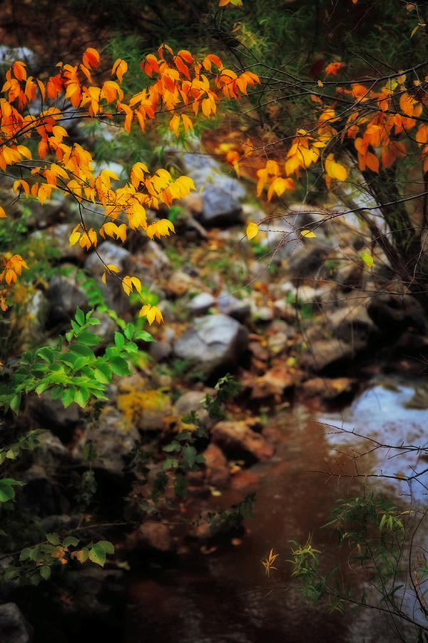 Autumn Photograph - Colors On The Creek by Toni Hopper
