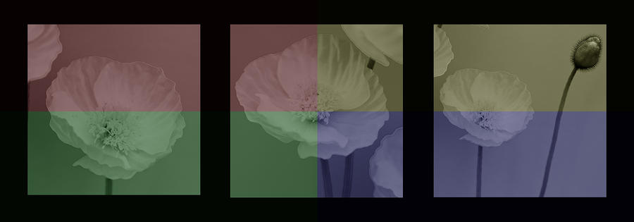 Colour Block Poppy Triptych Photograph  - Colour Block Poppy Triptych Fine Art Print