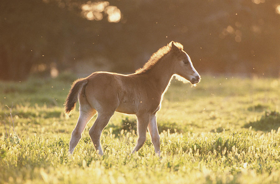 Colt In Meadow Photograph  - Colt In Meadow Fine Art Print