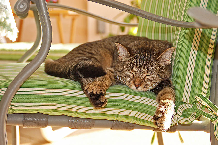 Comfy Kitty Photograph  - Comfy Kitty Fine Art Print