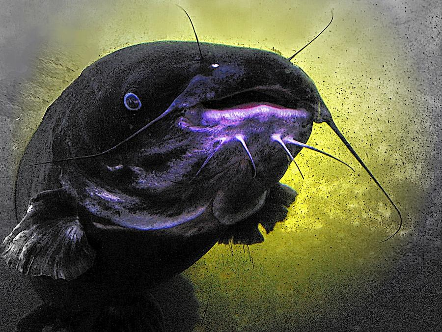 Ocean Catfish Digital Art - Coming Face To Face by Carrie OBrien Sibley