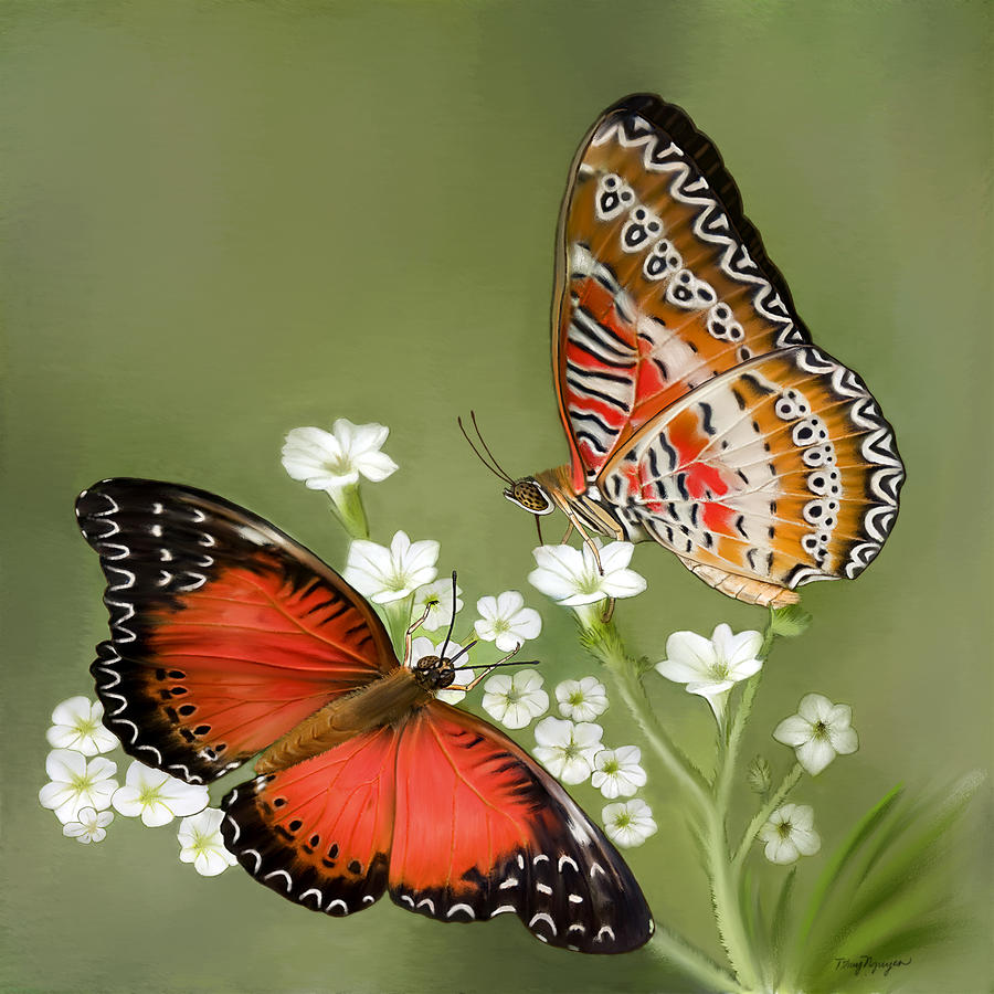 Common Lacewing Butterfly Digital Art  - Common Lacewing Butterfly Fine Art Print