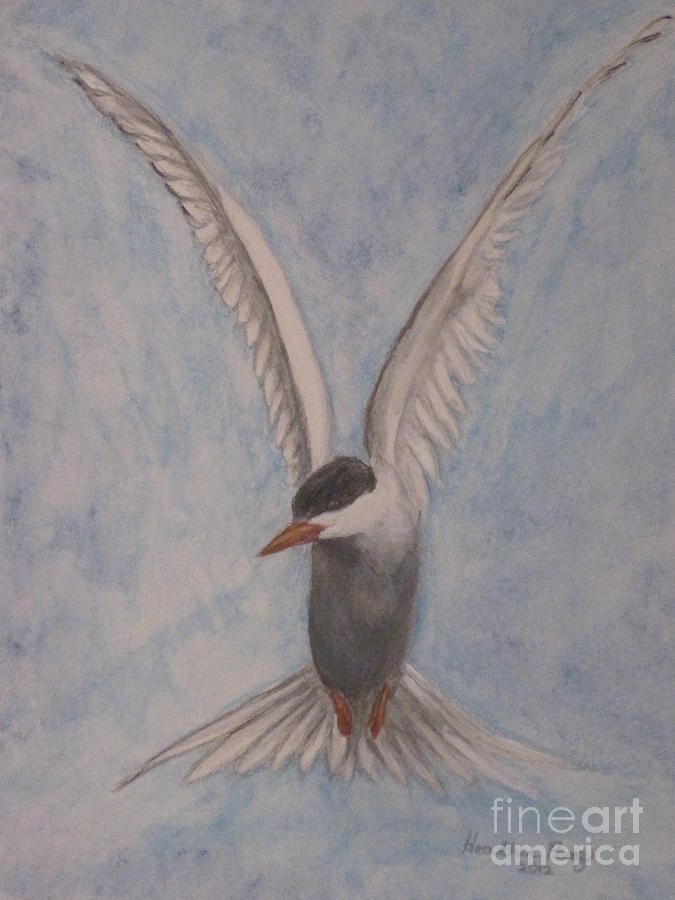 Common Tern In Flight Mixed Media