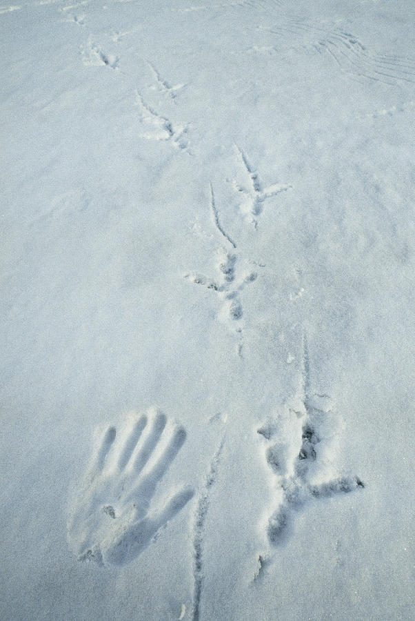 eagle tracks - photo #5