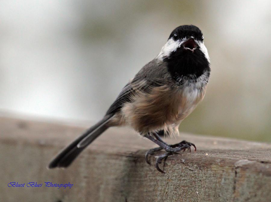 Birds Photograph - Complaint by Ed Nicholles