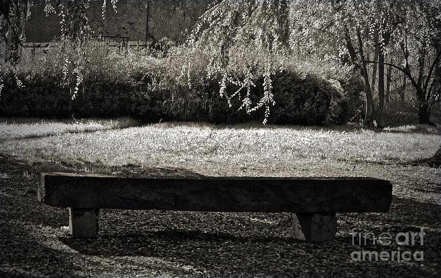 Bench Photograph - Concurrence Of Causes by Gwyn Newcombe