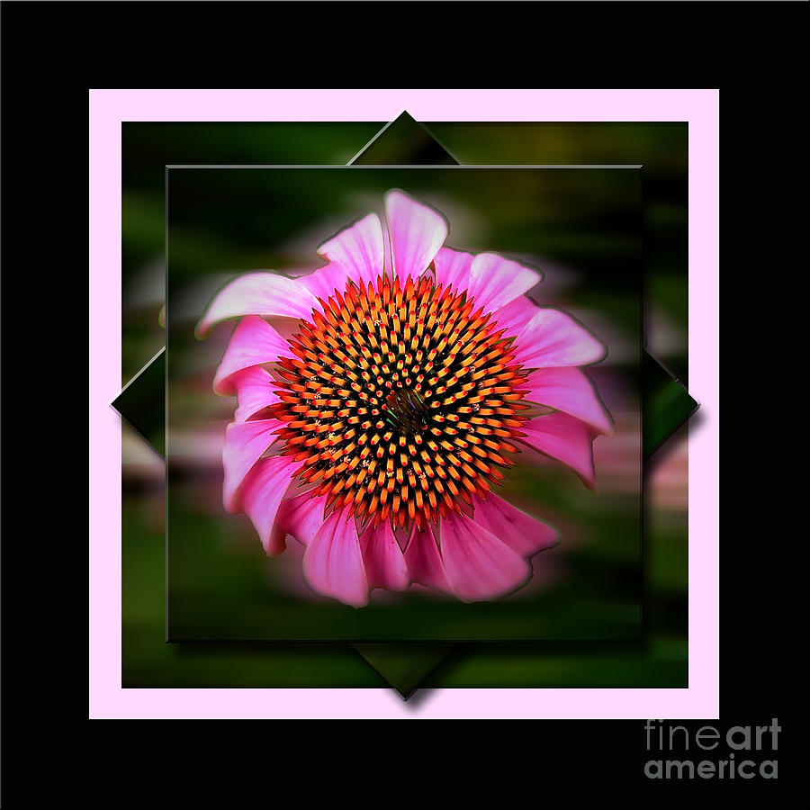 Coneflower Geometric Photograph  - Coneflower Geometric Fine Art Print