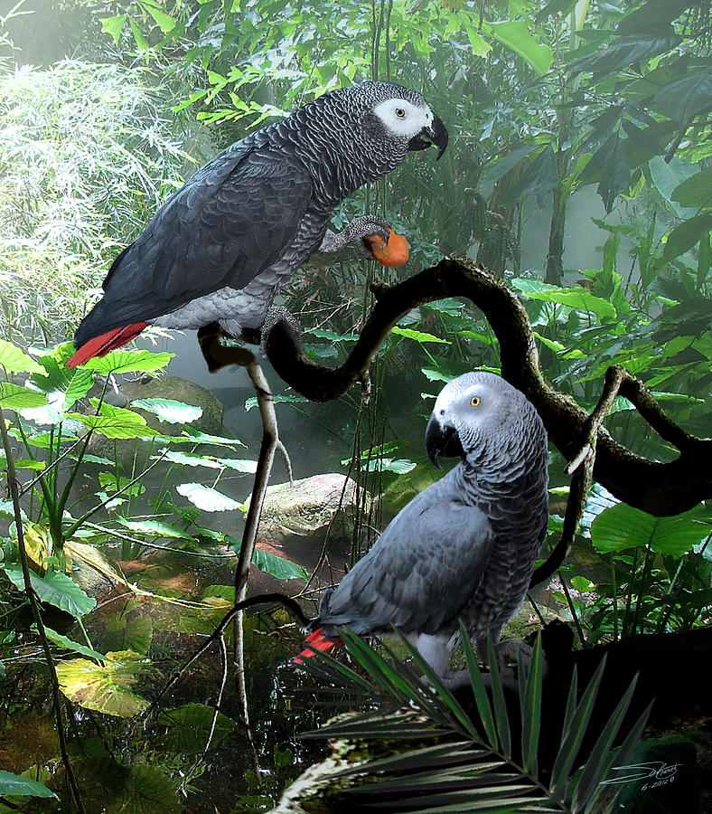 Congo African Grey Parrots Digital Art