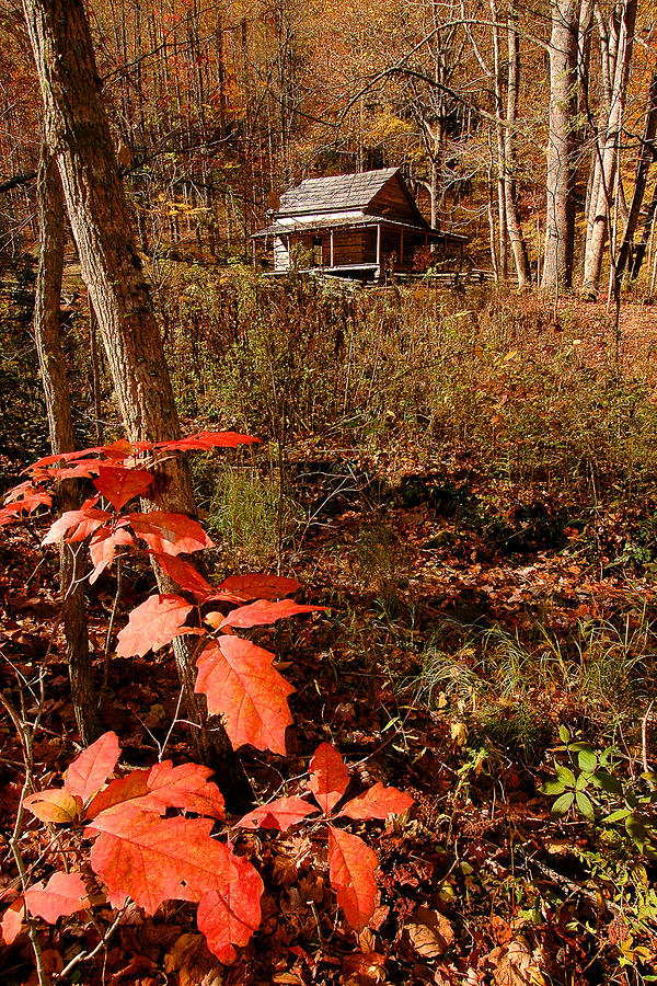 Cook Cabin Photograph
