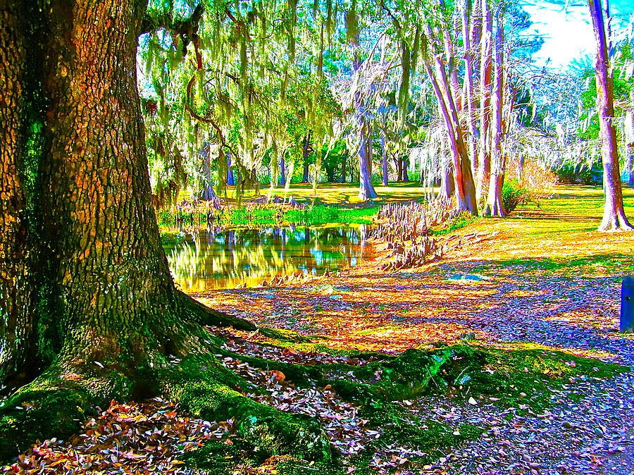 Tree Photograph - Cool Feeling by Frank SantAgata