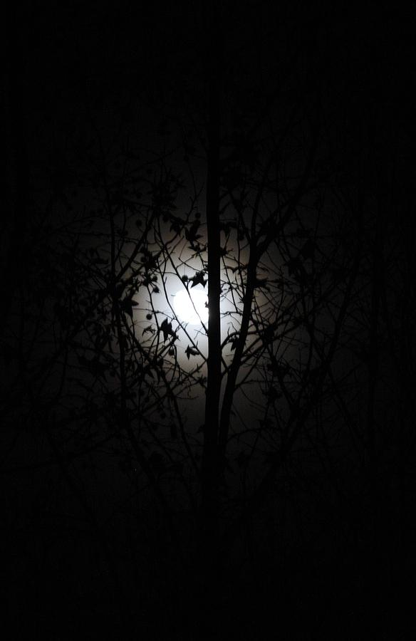 Cool Moon Photograph  - Cool Moon Fine Art Print