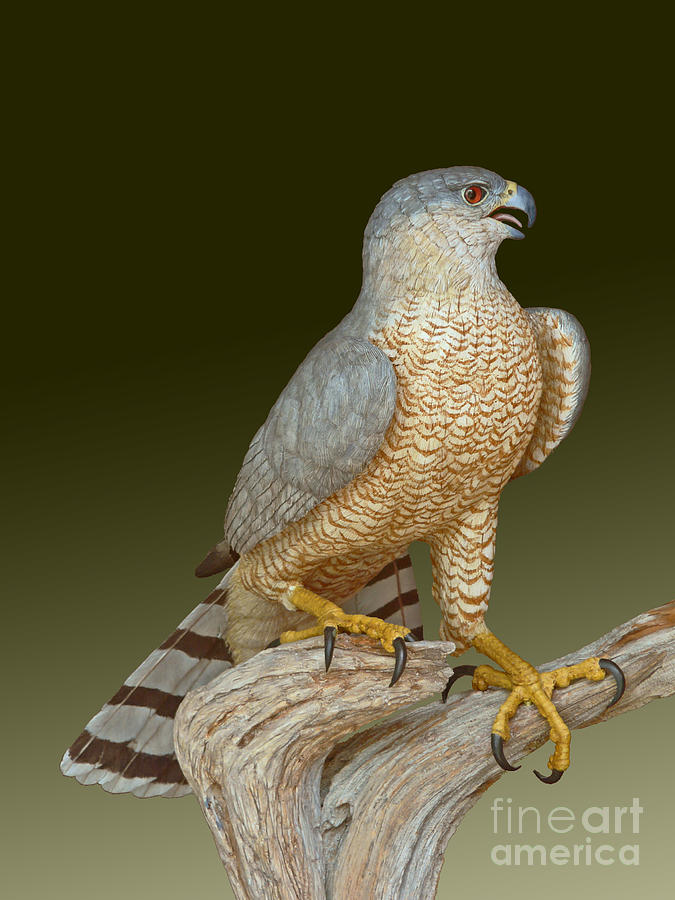 Coopers Hawk Sculpture