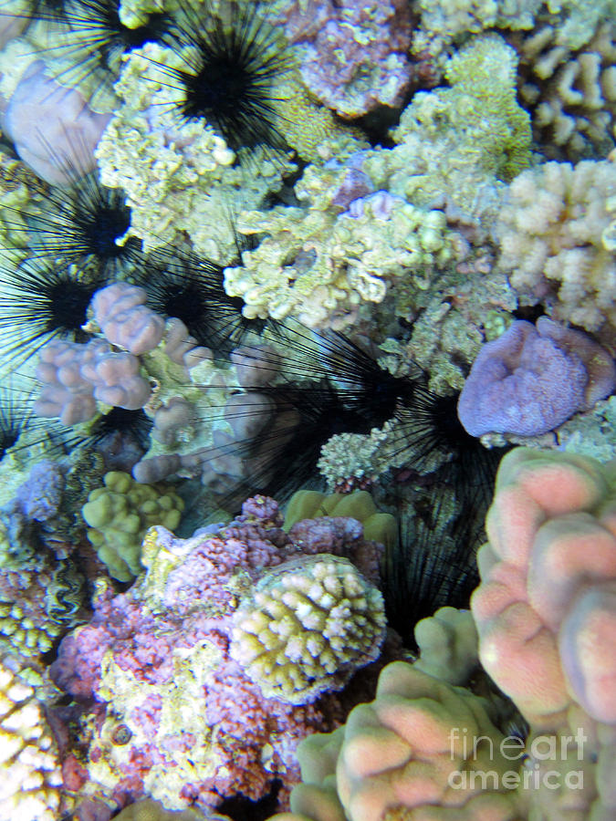 Coral Gardens Photograph By Tina Broccoli