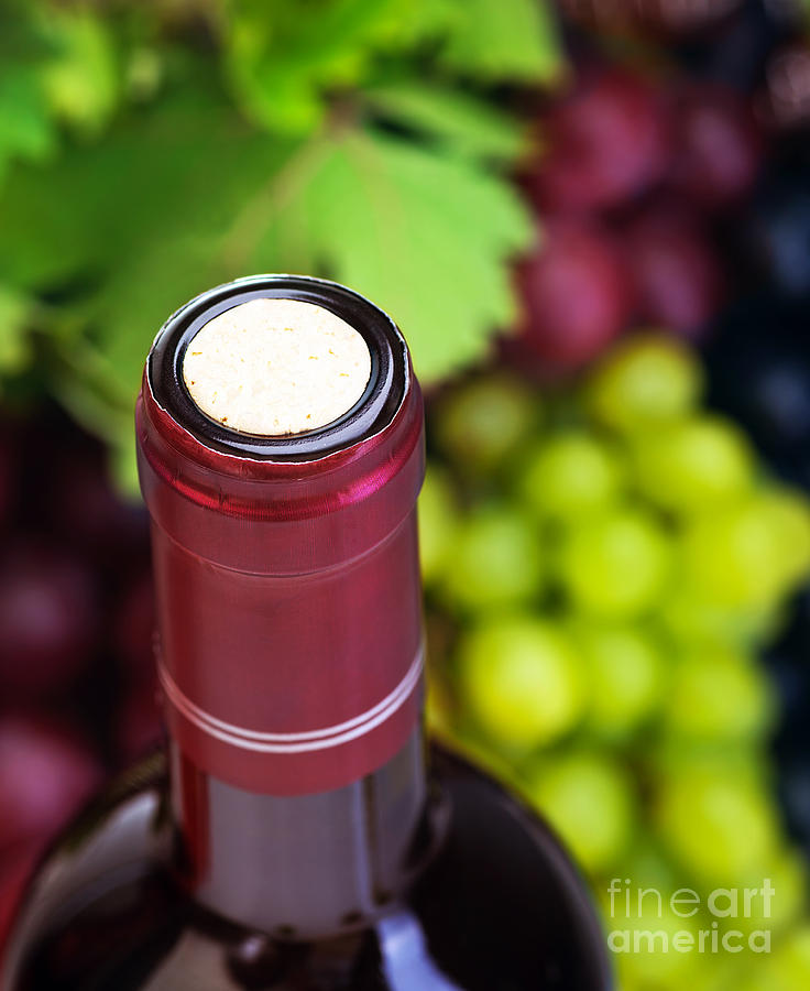 Cork Of Wine Bottle  Photograph  - Cork Of Wine Bottle  Fine Art Print