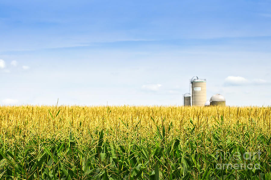 Corn Field With Silos Photograph
